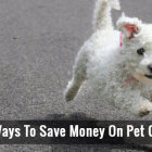 4 Ways To Save Money On Pet Care